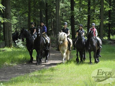 Eper Paarden4daagse