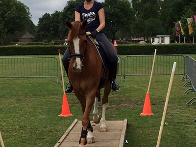 Clinic Working Equitation